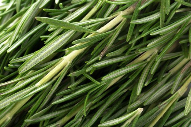 Tinh dầu hương thảo ngăn ngừa nấm phát triển