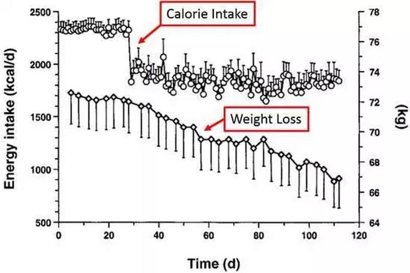 Protein giúp hạn chế lượng calo