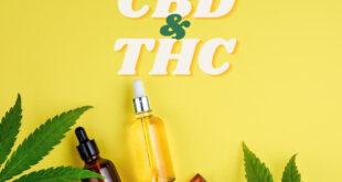 CBD và THC công dụng, lợi ích và tác dụng phụ